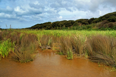 Beach Drainage (Wetlands near sand road from 90 Mile Beach to main route)